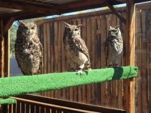 Garden Route Birds of Prey Rehab Centre